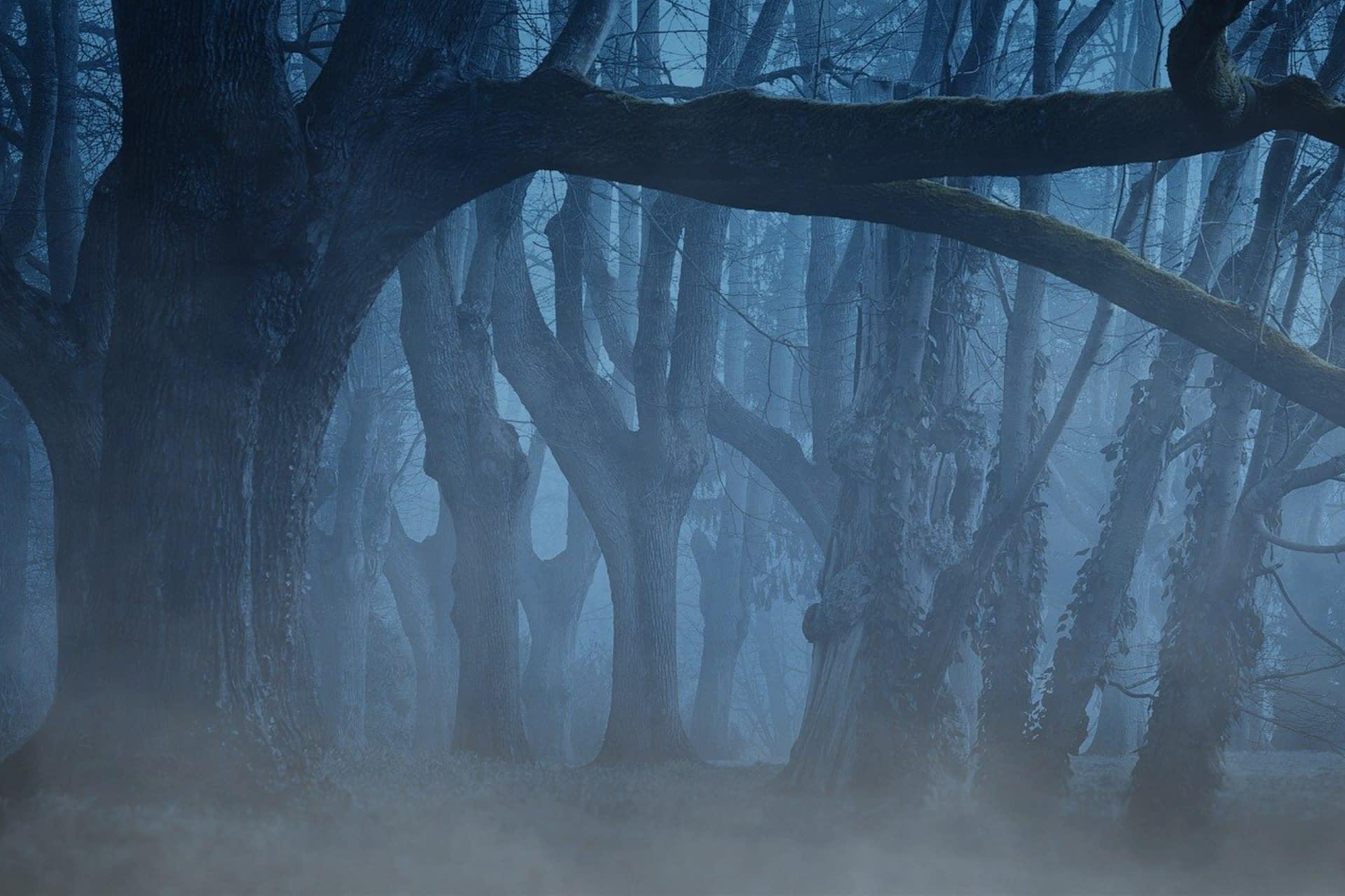 Rauhnächte - Dunkler Wald mit Nebel